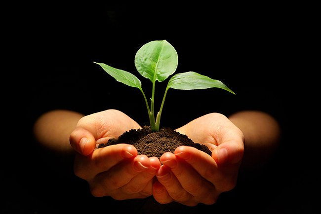 inspiring chinese proverb the best time to plant a tree was 20